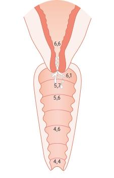 pH d'une femme en période d'ovulation