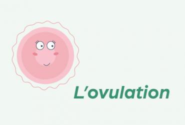Fonctionnement de l'ovulation